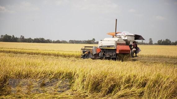 Thị trường nông sản tuần qua: Giá lúa gạo tăng nhẹ