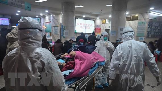 Dịch bệnh viêm phổi do virus corona: Số người tử vong tiếp tục tăng