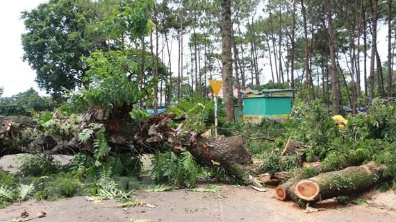 Lâm Đồng: Lốc xoáy tàn phá hàng chục tấn sầu riêng ở huyện Đạ Huoai