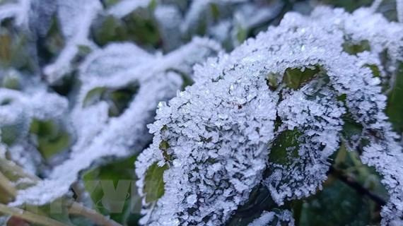 Bắc Bộ nắng ráo, vùng núi cao có băng giá và sương muối