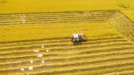 [Photo] Đồng bằng sông Cửu Long thắng lợi toàn diện vụ Đông Xuân 2020
