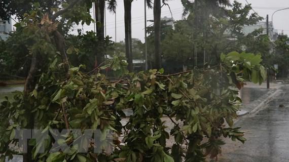 Phú Yên: Mưa rất to, gió giật mạnh, nhiều cây xanh đổ, 38 xã mất điện