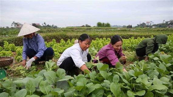 Tồn tại nhiều bất cập trong quy hoạch vùng nông thôn Hà Nội