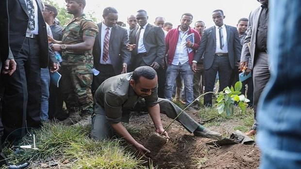 Ethiopia lap ky luc trong hon 200 trieu cay xanh trong mot ngay hinh anh 1