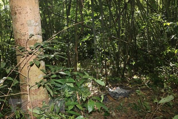 Binh Phuoc: Nam thanh nien tu vong nghi do trung dan khi di san hinh anh 1