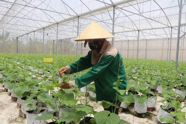 Chinh phu ban hanh nghi quyet bao dam an ninh luong thuc quoc gia hinh anh 1