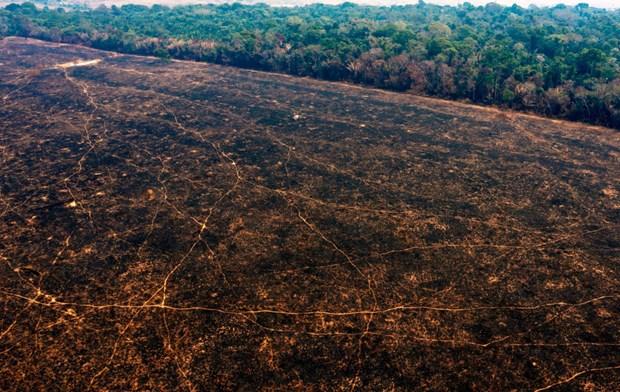 WWF: Dien tich rung bien mat trong thap ky qua lon hon ca nuoc Duc hinh anh 1