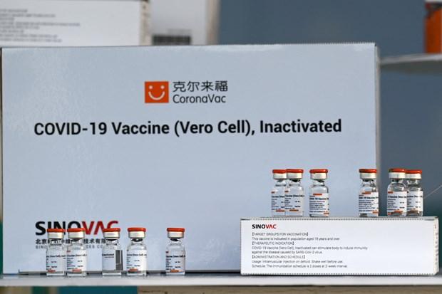 Singapore bat dau danh gia muc do an toan cua vaccine Sinovac Biotech hinh anh 1