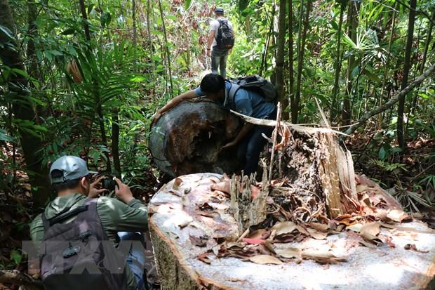 Quang Ngai: Kiem tra thuc te hien truong pha rung phong ho Pho Phong hinh anh 1