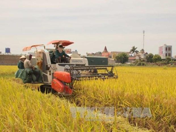 Giao su Vo Tong Xuan ly giai vi sao nguoi Viet lai chon gao Campuchia hinh anh 2