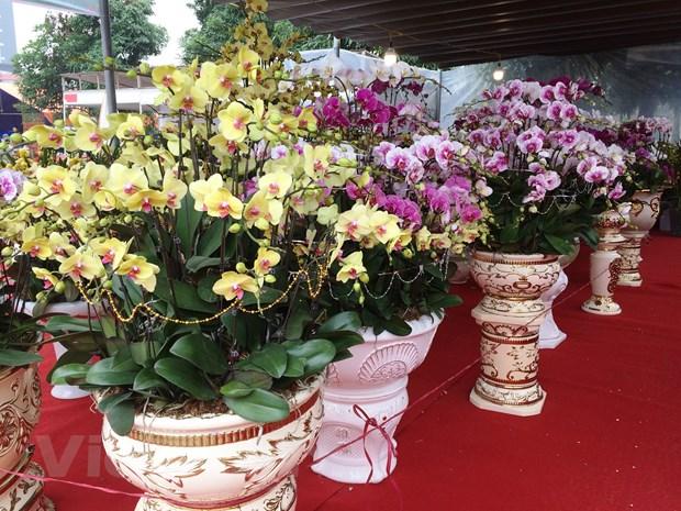 Thi truong hoa lan choi Tet: Gia tren da tang cao nhung van dat khach hinh anh 10