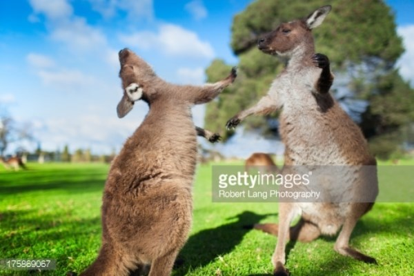 Kenh truyen hinh Australia Plus chinh thuc len song tai Viet Nam hinh anh 1