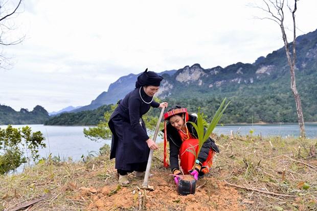 Top 10 Hoa khoi Du Lich Viet Nam 2020 phu xanh dat trong o Tuyen Quang hinh anh 1