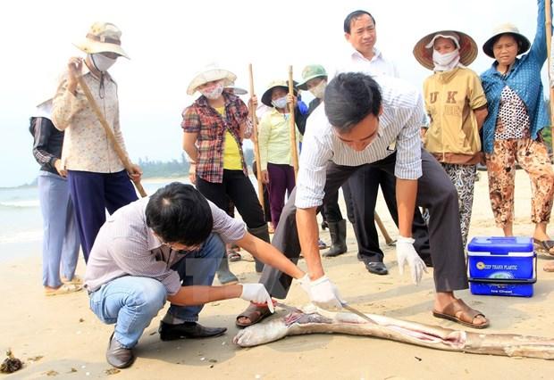 Quang Binh: Tam tu nguoi dan sau vu cong bo nguyen nhan ca chet hinh anh 1