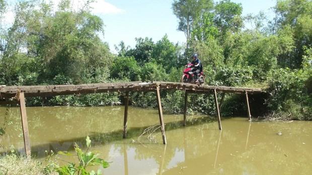 Quang Tri: Nguoi dan thap thom voi nhung cay cau... cho sap hinh anh 1