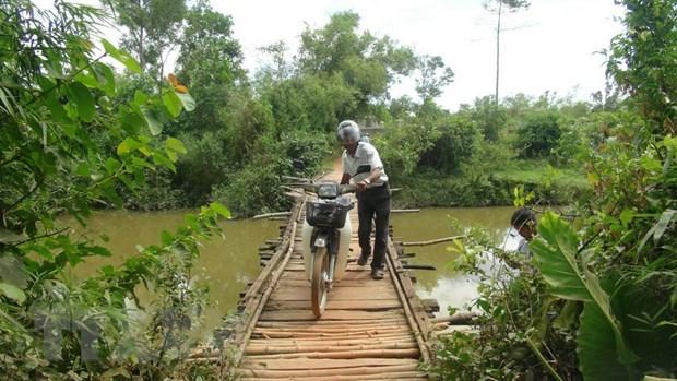 Quang Tri: Nguoi dan thap thom voi nhung cay cau... cho sap hinh anh 2