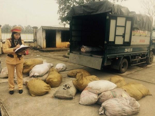 Thanh Hoa: Chan dung vu van chuyen 900kg bi lon boc mui hoi thoi hinh anh 1