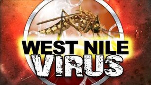 Virus Tay song Nile va Zika co the gay ra cac benh ve tieu hoa hinh anh 1