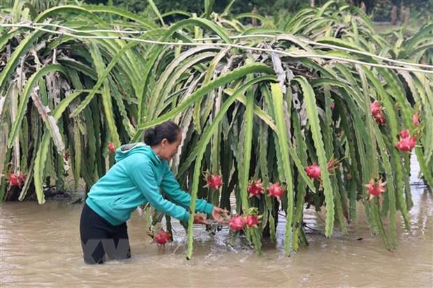 Binh Thuan: 200 ho dan o huyen Ham Thuan Nam bi co lap do mua lu hinh anh 1