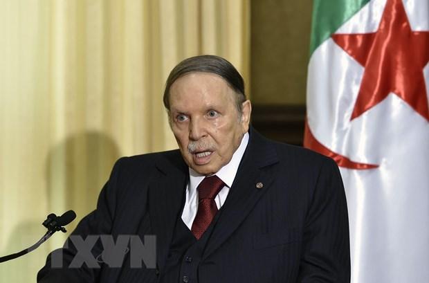 Tong thong Algeria thay nguoi phu trach chien dich tranh cu hinh anh 1