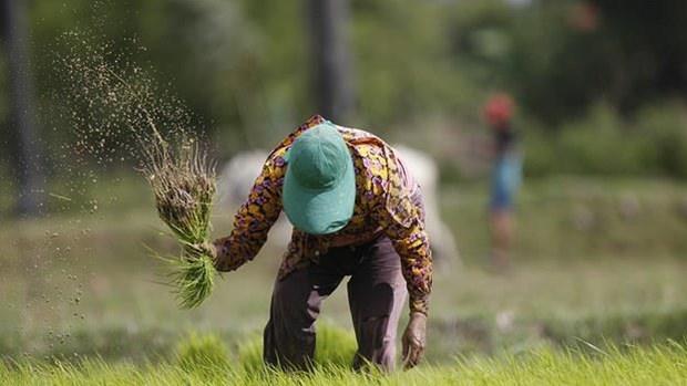 Thu tuong Campuchia keu goi da dang hoa thi truong xuat khau gao hinh anh 1