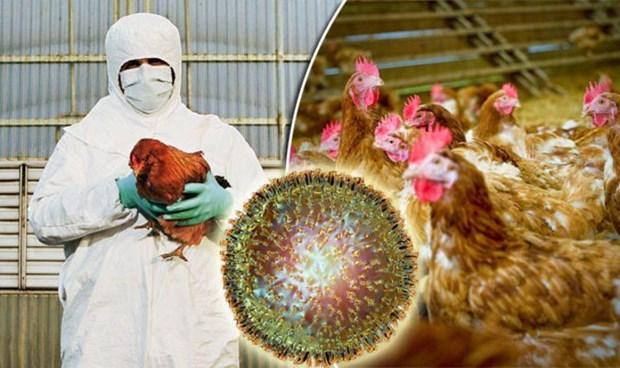 Cum gia cam chung H5N6 lan dau tien bung phat tai Campuchia hinh anh 1