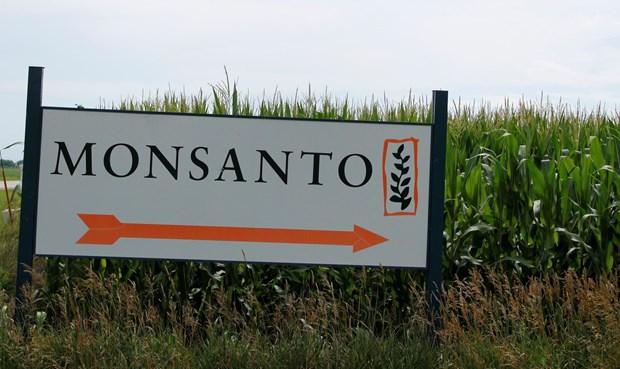 Monsanto dinh be boi truyen thong, cong ty me phai xin loi hinh anh 1