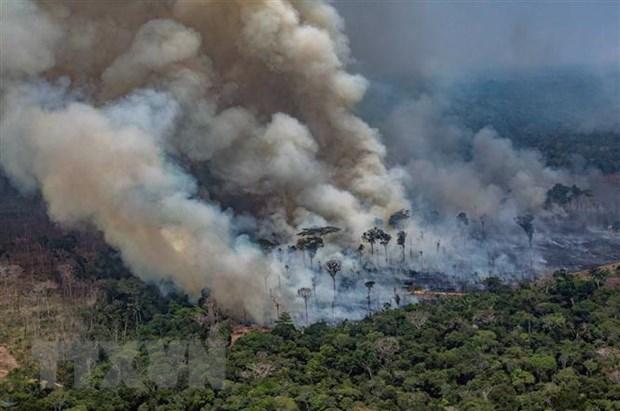 Peru, Colombia de nghi to chuc hoi nghi thuong dinh khu vuc Amazon hinh anh 1
