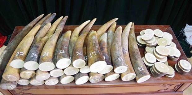 Khang nghi viec ap dung an treo trong vu mua ban 17kg nga voi hinh anh 1