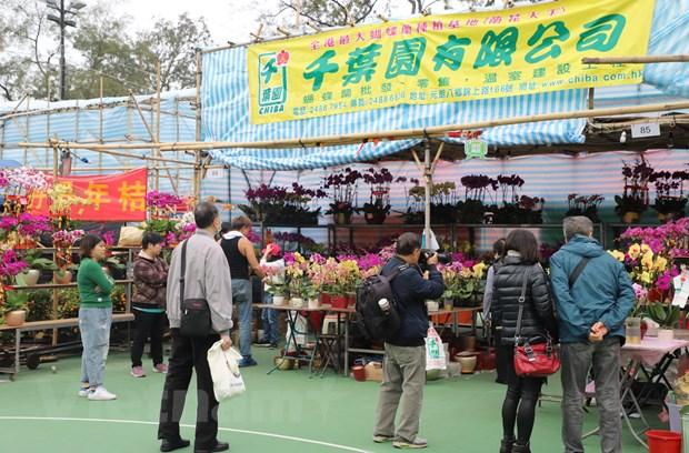 Luong khach den hoi cho hoa Xuan Hong Kong 2020 giam dang ke hinh anh 1