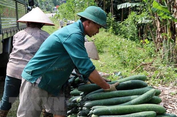 Hoa Binh: Bi xanh chat dong ven duong, gia sut giam manh hinh anh 1