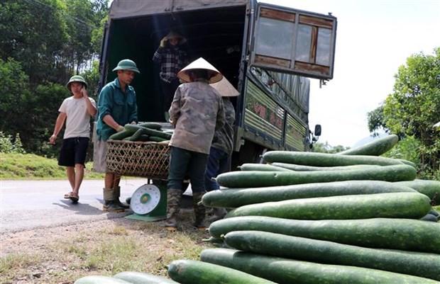 Hoa Binh: Bi xanh chat dong ven duong, gia sut giam manh hinh anh 2