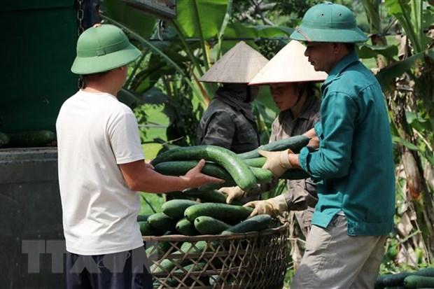 Hoa Binh: Bi xanh chat dong ven duong, gia sut giam manh hinh anh 3