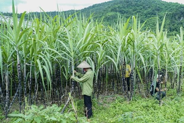 Ap thue duong Thai Lan: Co hoi nao cho nganh mia duong Viet Nam? hinh anh 2