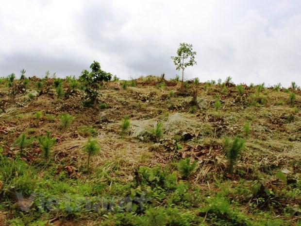 Dak Nong: Thu hoi gan 70.000m2 dat trong rung bi lan chiem trai phep hinh anh 1
