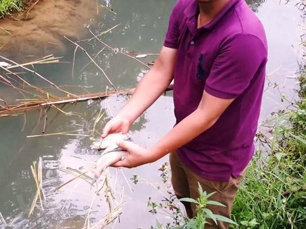 [Photo] Tom ca chet bat thuong dau nguon con suoi do vao song Da hinh anh 6