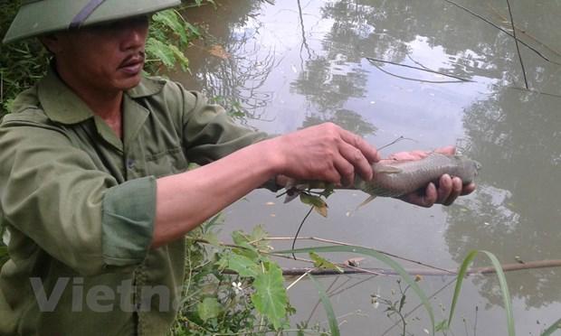 [Photo] Tom ca chet bat thuong dau nguon con suoi do vao song Da hinh anh 7