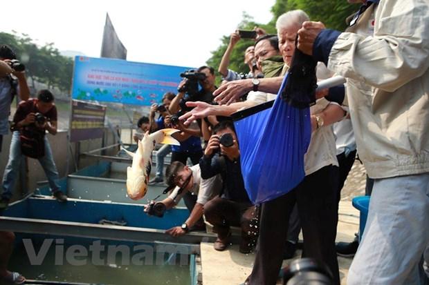 Ha Noi: Tha ca Koi Nhat Ban xuong song To Lich va Ho Tay hinh anh 4