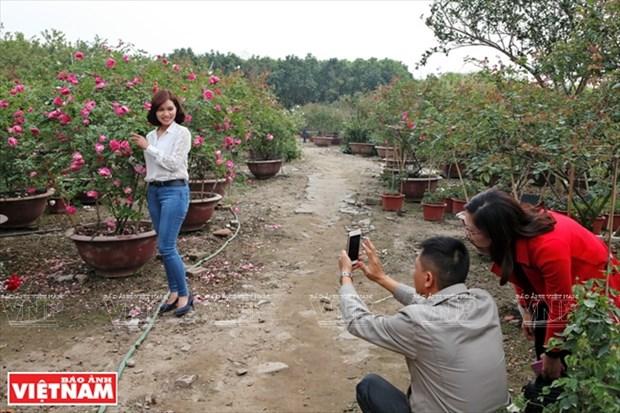 Nguoi dan Hung Yen lam giau tu nhung vuon hoa hong co hinh anh 6