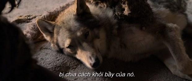 ''Alpha'' - Cau chuyen giua nguoi-soi lam thay doi lich su nhan loai hinh anh 6