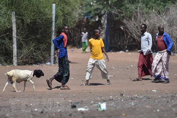 UNHCR ho tro hon 81.000 nguoi Somalia tu nguyen hoi huong tu Kenya hinh anh 1