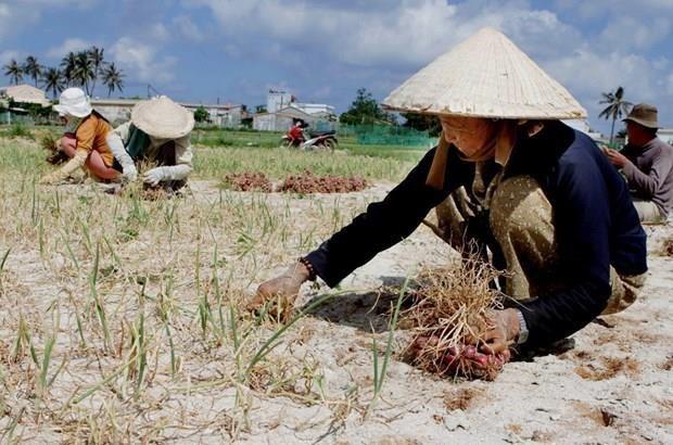 Quang Ngai: Ap luc tu dat thai nong nghiep tai huyen dao Ly Son hinh anh 1