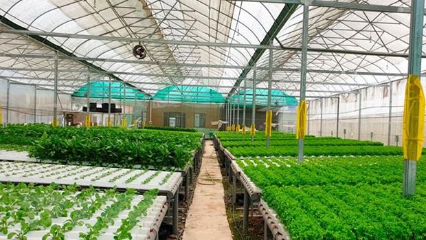 FAO khoi dong Nam Quoc te ve rau va trai cay 2021 hinh anh 1