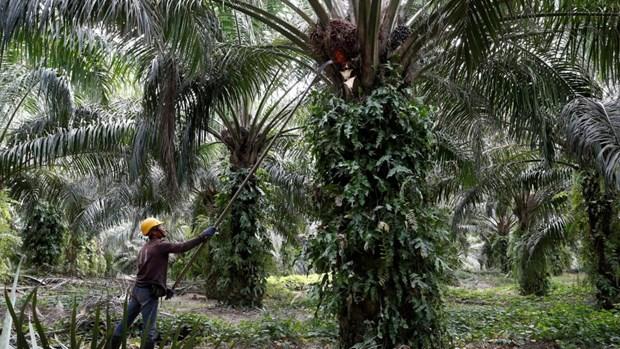 Malaysia chuan bi khoi kien EU len WTO xung quanh tranh chap ve dau co hinh anh 1