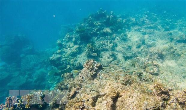 Nha khoa hoc canh bao ve trien vong phuc hoi ran san ho Barrier Reef hinh anh 1