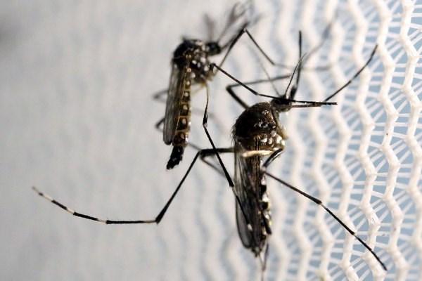 Canh bao nguy co Zika lan rong tai bo bien vung Vinh nuoc My hinh anh 1
