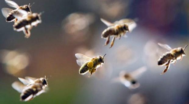 Di thap huong o nghia trang, 14 nguoi bi dan ong dot phai nhap vien hinh anh 1
