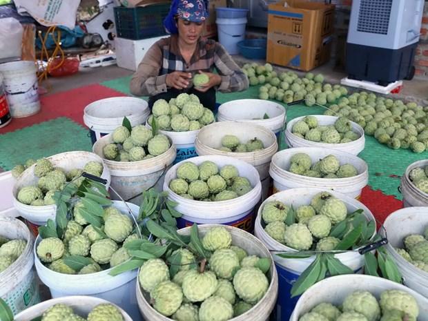 Nong dan Hai Duong thu lai tren 200 trieu dong/ha tu trong na hinh anh 1