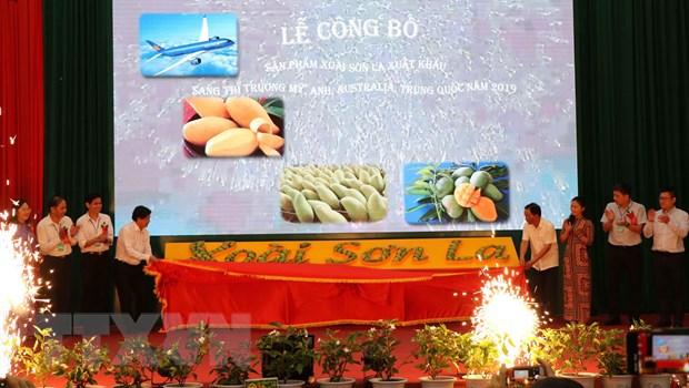 Cong bo san pham xoai Son La xuat khau sang thi truong cac nuoc hinh anh 1