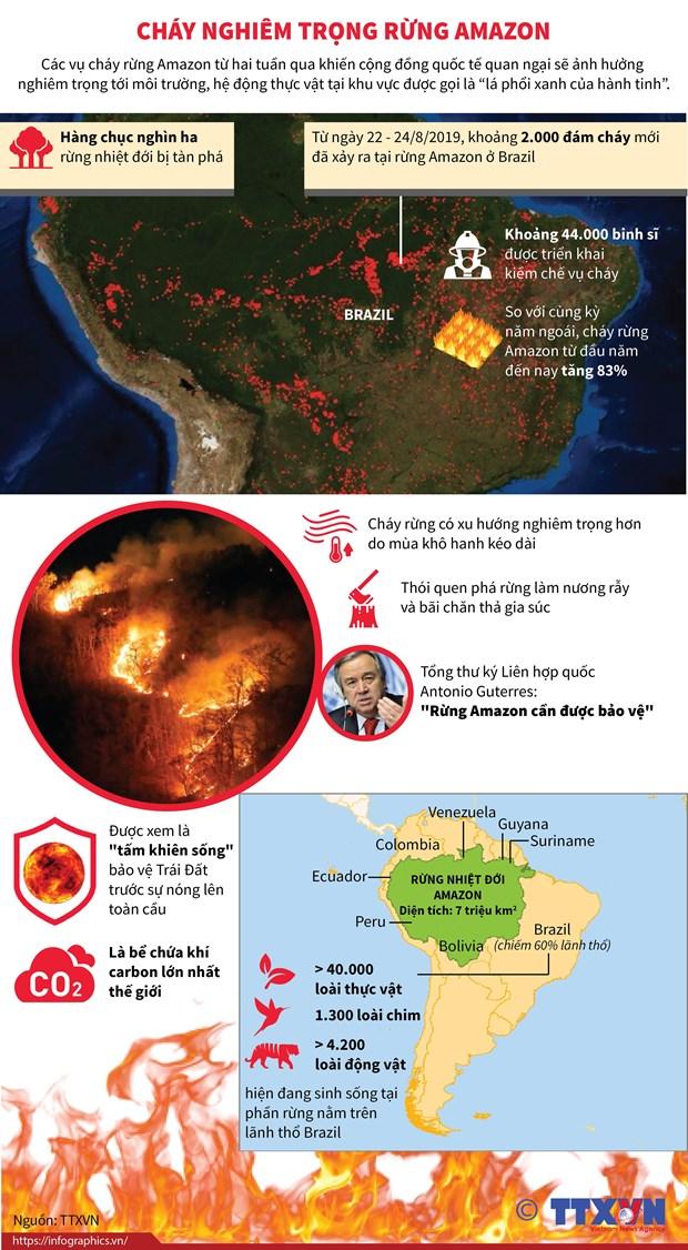 Brazil gong minh cuu 'la phoi xanh cua hanh tinh' rung Amazon hinh anh 1